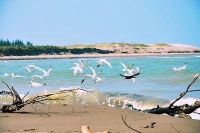 fotos de la playa en casitas y costa esmeralda veracruz