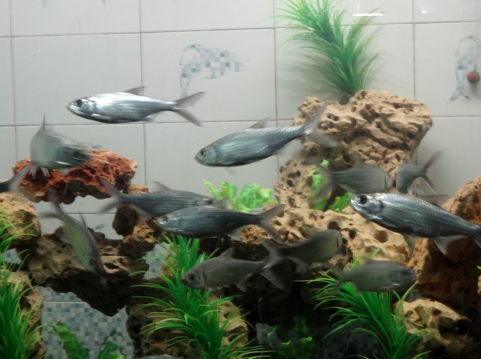 Fish for aquarium in kolkata - The Dolphin Fish Aquarium