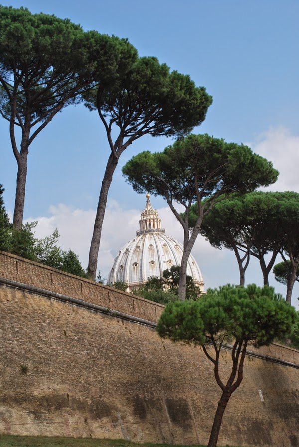 Сосна Пиния в Риме