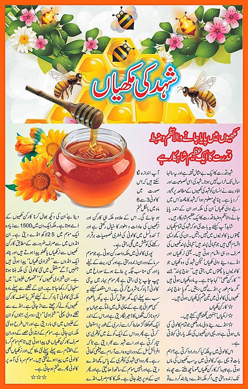 Honey Bee Information Urdu Farming Honey Bee Poem ~ Urdu 2014, 2015 ...