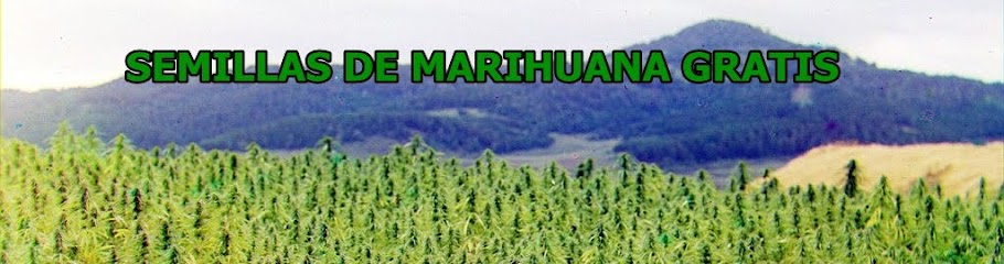Semillas de marihuana gratis