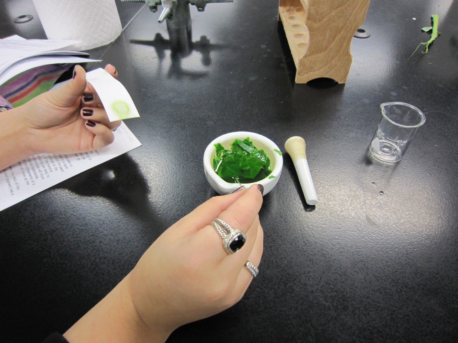 Amy Brown Science: Leaf Pigment Chromatography