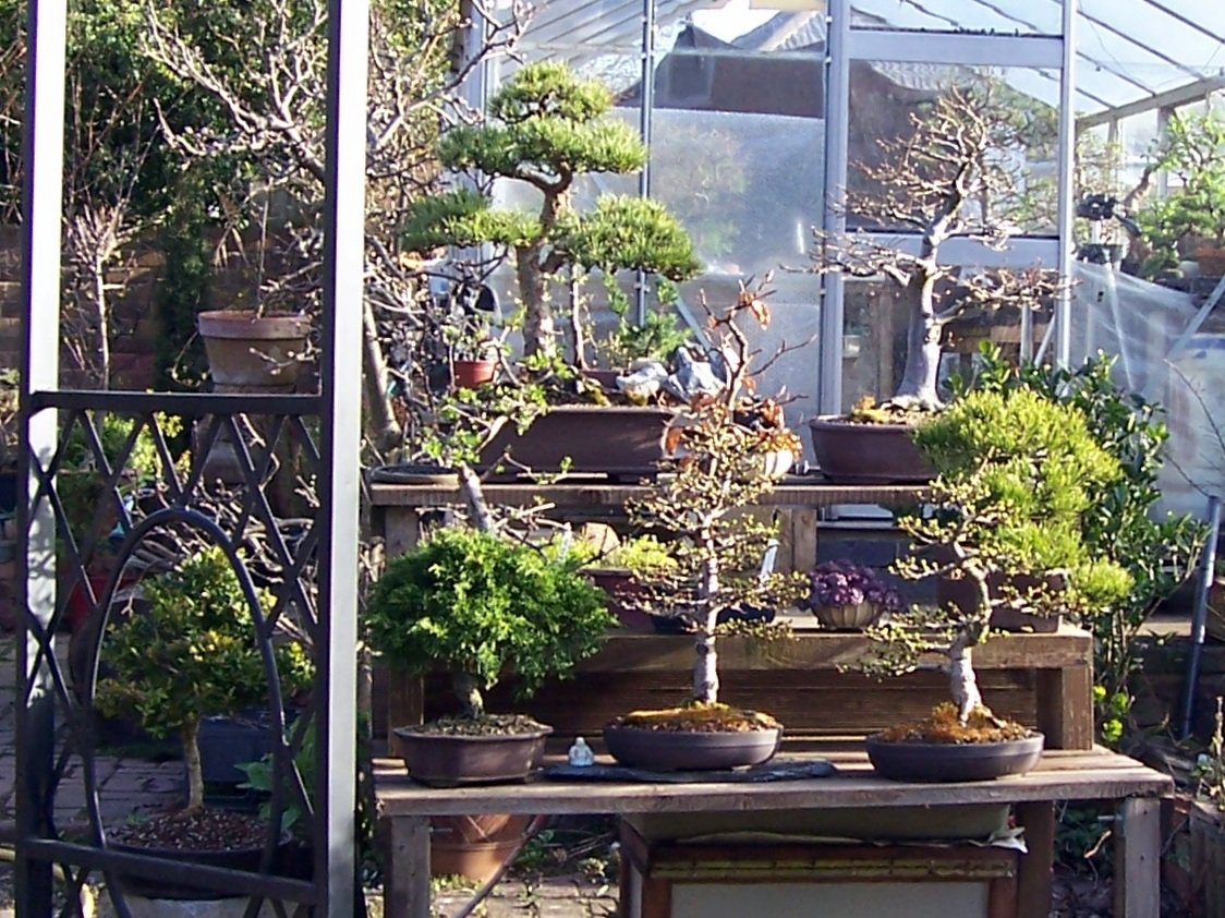 MiKo Bonsai Nice To See Some Trees Back On The Benches