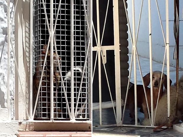 Cães e gatos vivem dentro da casa que é motivo de reclamação (Foto: Mateus Bassi / G1)