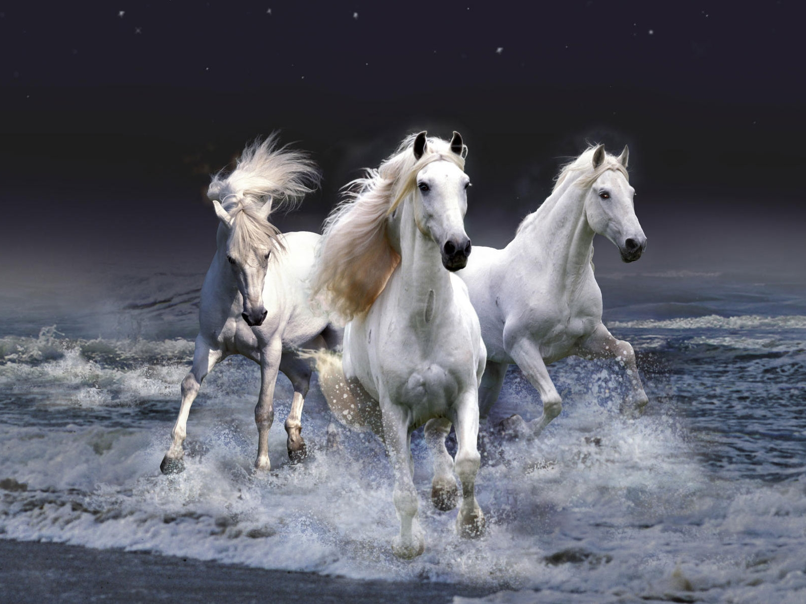 Fantastic   Wallpaper Horse Ultra Hd - wild+horses+wallpapers+14  Trends_6610082.jpg
