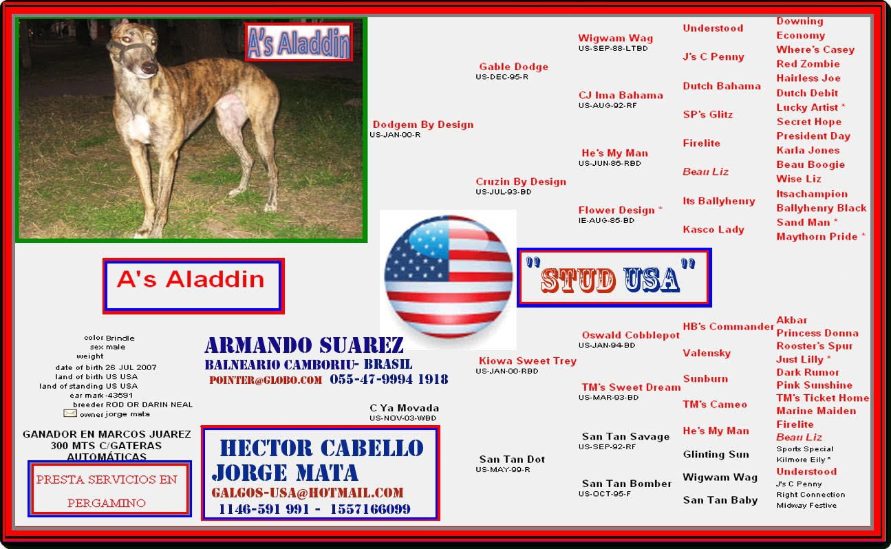 GRAN GENETICA DE A'S ALADIN, STUD USA, DE HECTOR CABELLO Y JORGE MATA.