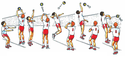volleyball block kinesiology analysis The volleyball spike is a complex motion that can be characterized  neglected  in classical statistical analyses of biomechanical data recent.