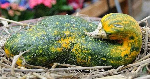 funny-vegetables-optical-illusion خضروات بأشكال مضحكة - خدع بصرية