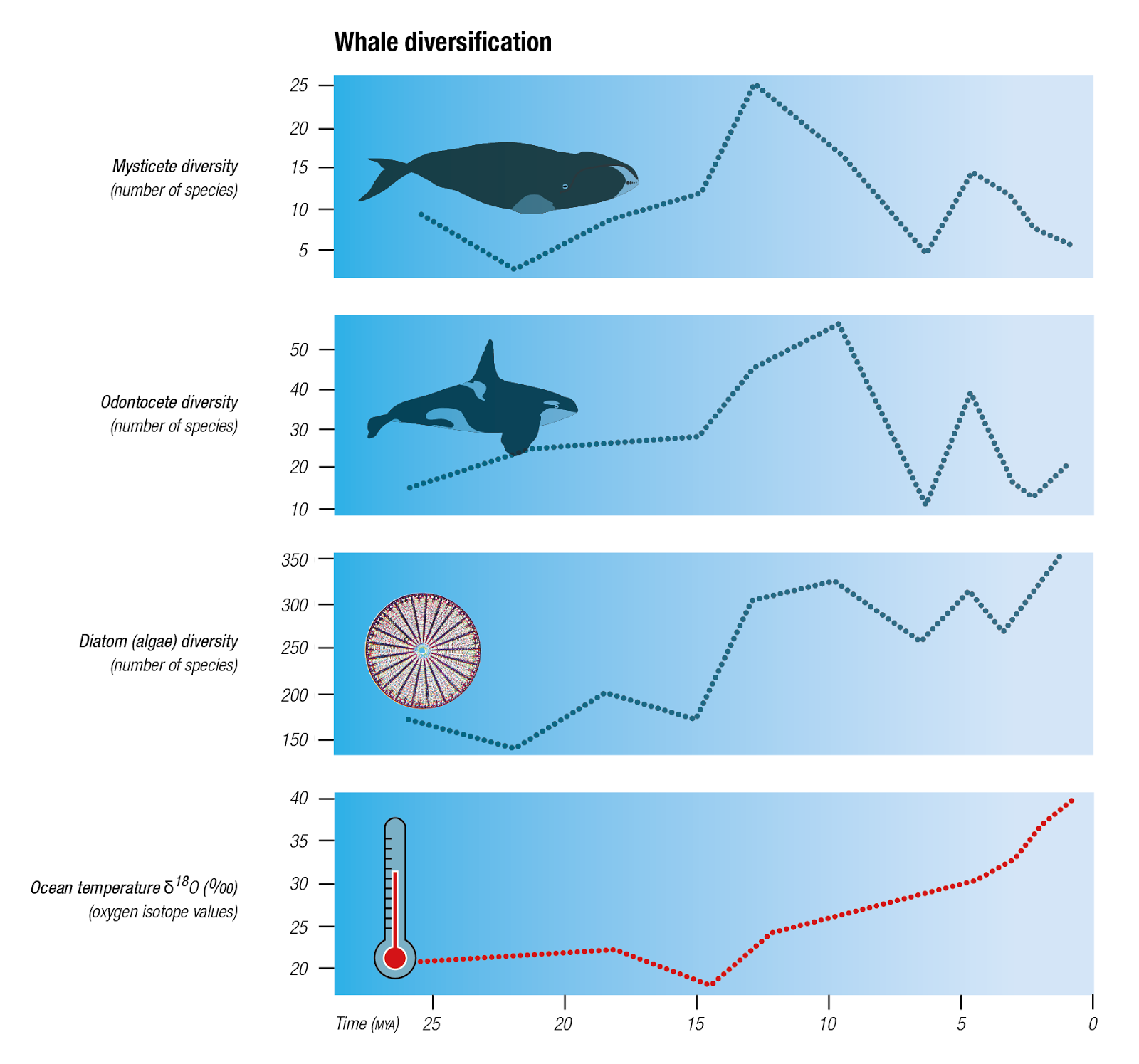 The evolution of whales | Blue Planet Society