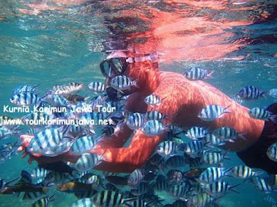berenang bersama ikan di maer spot