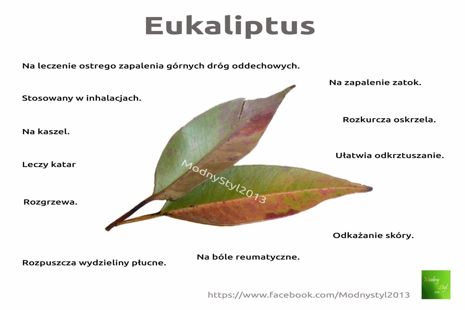 Na ratunek eukaliptus
