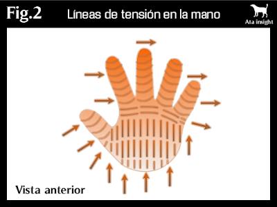 líneas de tensión en la mano