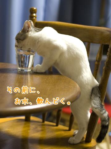 立ち飲みする子猫