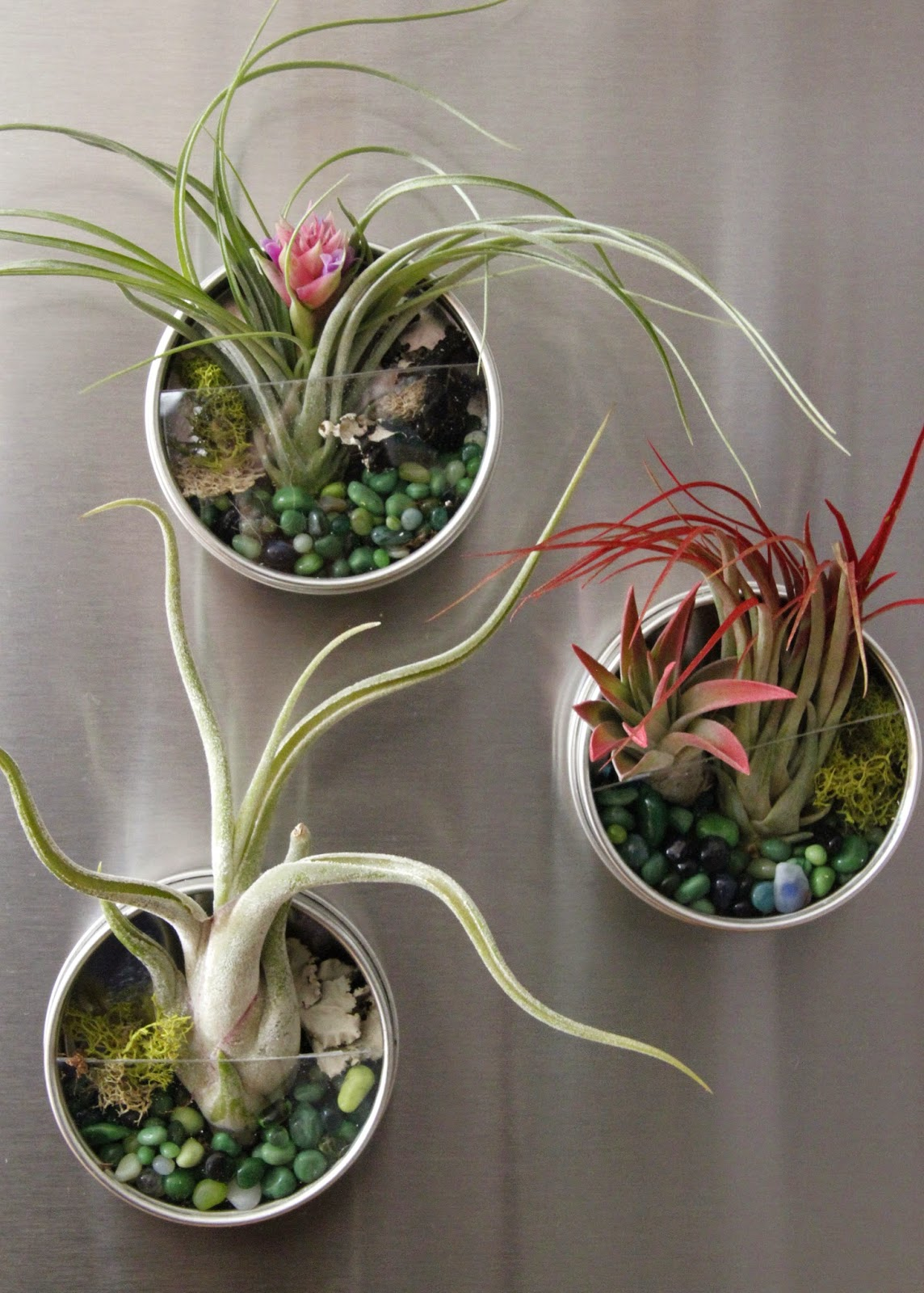 Tilly 39 S Nest DIY Magnetic Air Plant Terrariums