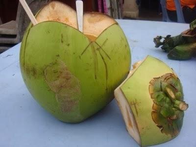 ... manfaat bagi manusia. Hampir semua bagian dari pohon kelapa mulai dari