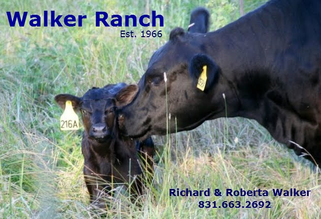 Walker Ranch Cattle