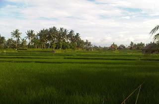 Ubud Rice Field