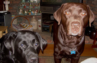 RIP Lucy & Blackie (the brown dog)