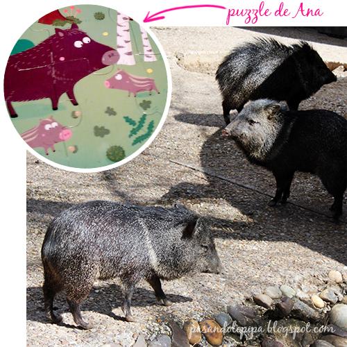 pasandolopipa : jabalis del zoo de madrid