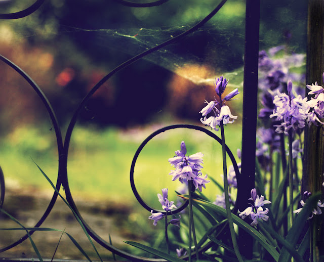 Garden gate with bluebells. Photograph by Tim Irving