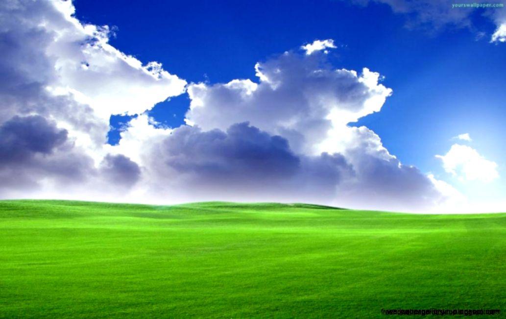Windows Green Grass Wallpaper Hd  Free High Definition Wallpapers