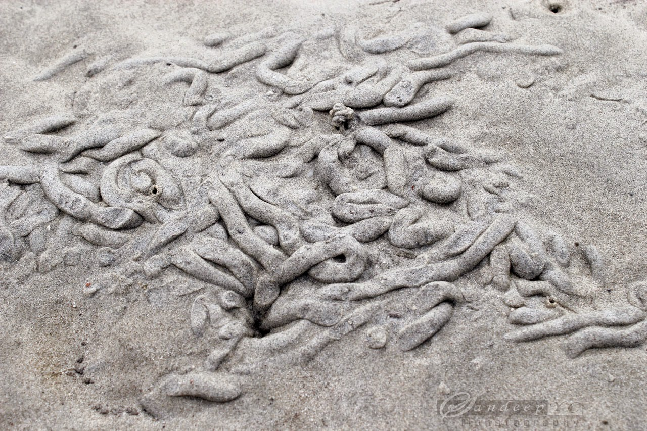 sand art made by the creatures on the beach
