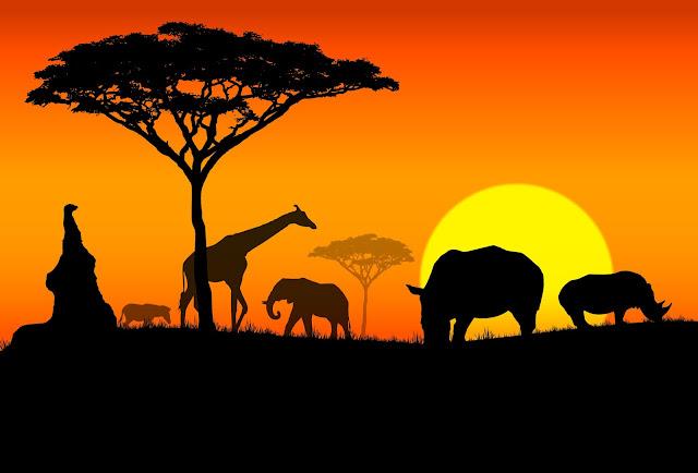 10 Fatos sobre a África que você não sabia!