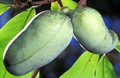 Most unusual fruits Seen On www.coolpicturegallery.us