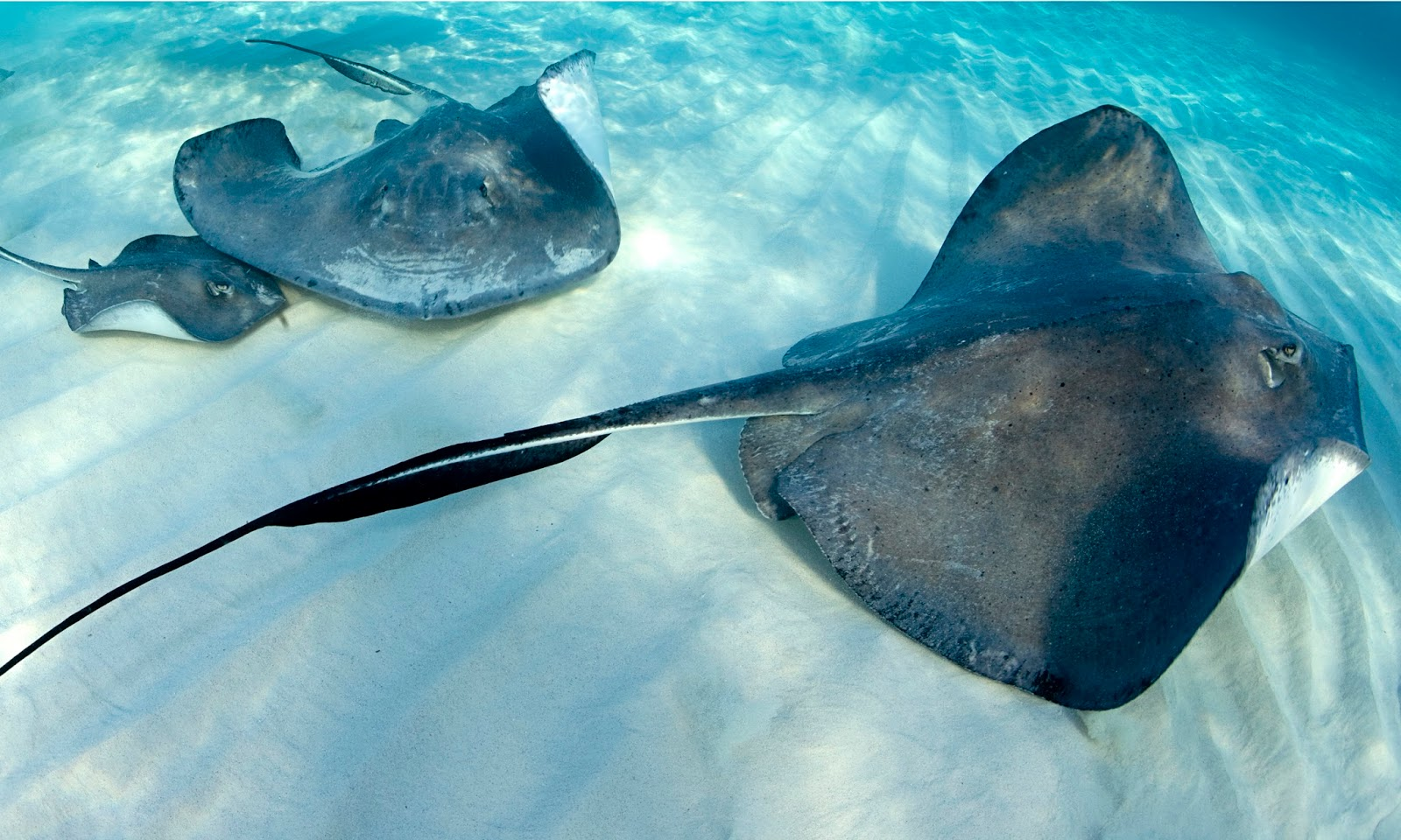 Something fish y about it for Is a stingray a fish
