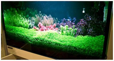 AquariumExpo 2013