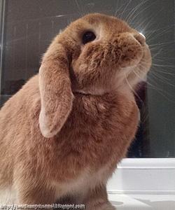 Nice rabbit.