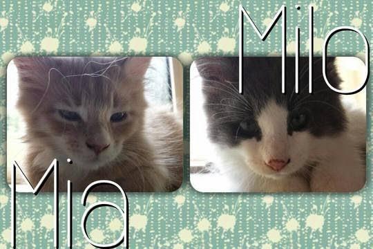 Mia & Milo