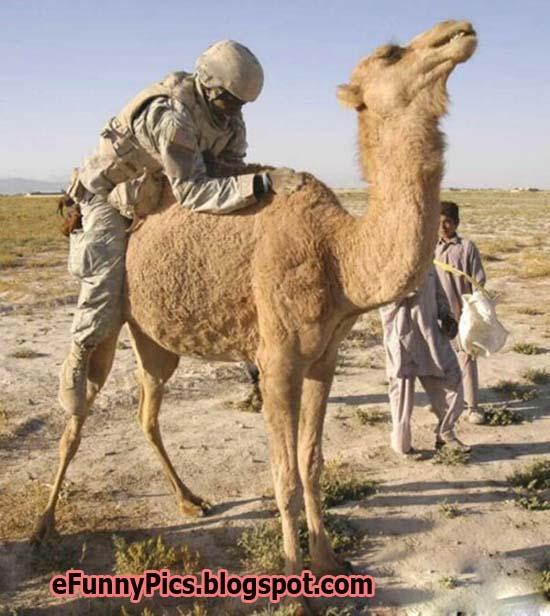 US Soldier v/s Desert Camel