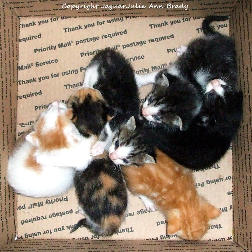 Six Baby Kittens at Three Weeks of Age