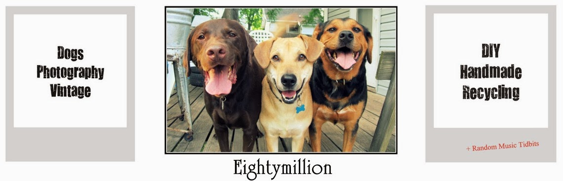 Eightymillion-DIY, Dogs, Photography, Vintage, & Recycling