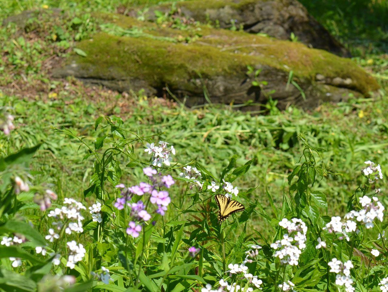 Flower Hill Farm Flower Hill Farm Butterflies 2011