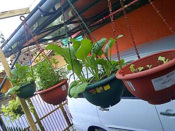 desain eksterior rumah dengan tanaman gantung