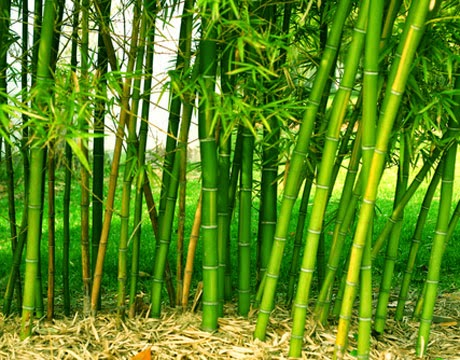 Business opportunities and Skill Acquisition: How to Start a Bamboo Farm
