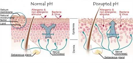 Natural Ph Of Human Skin