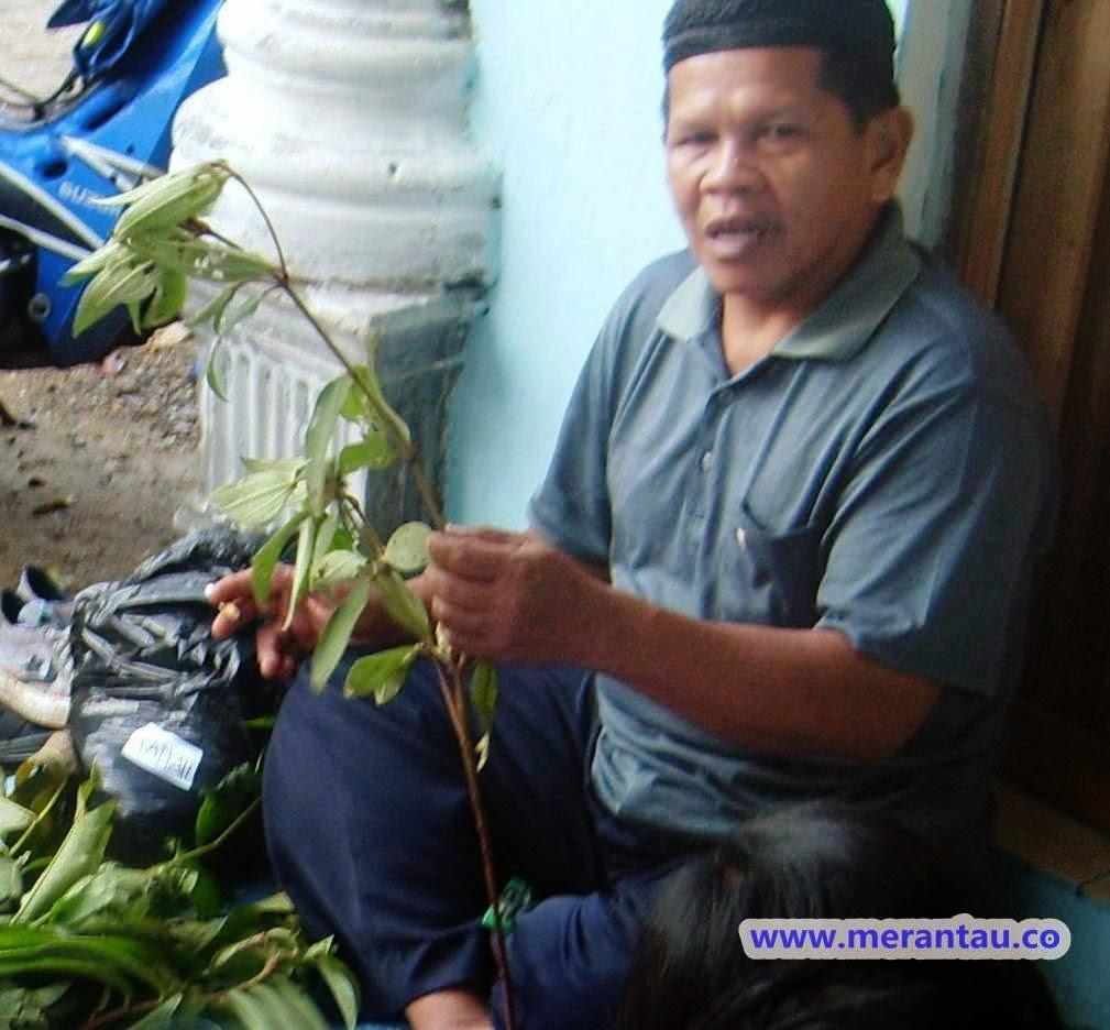 ahli tanaman obat kalsel
