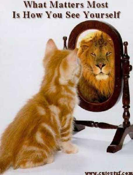Mirror Reflection