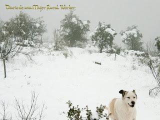 Disfrutando de la nieve