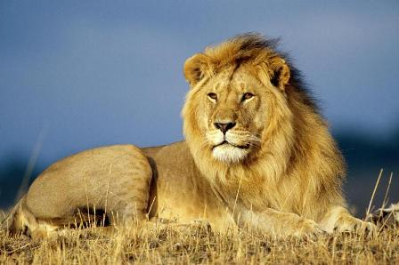 download wild animals wallpapers and photo gallery room2room