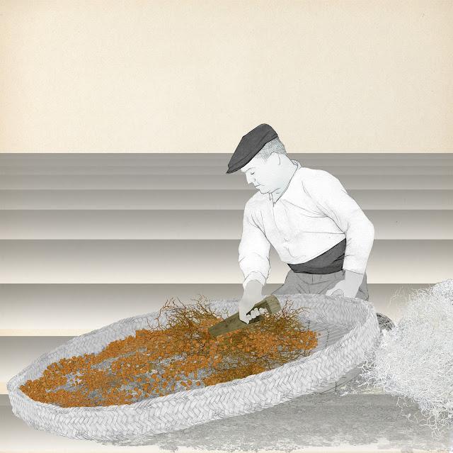 Crivar, limpiar de raices y tierra, la chufa, dibujo