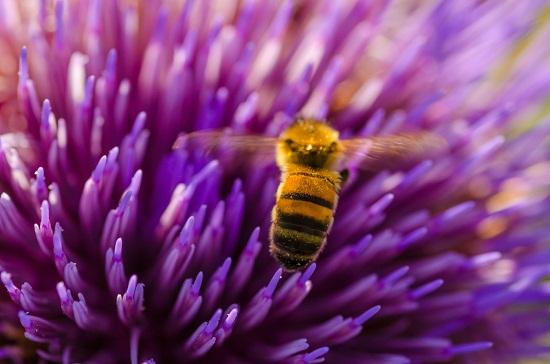 gambar artichoke flower