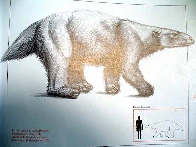 Xenathra prehistorica de Argentina Scelidotherium