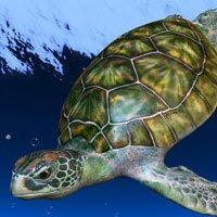 Daniel Chavez Moran: On Environmental Stewardship
