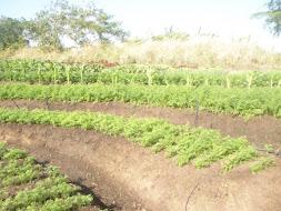 Técnica de Conservação do solo