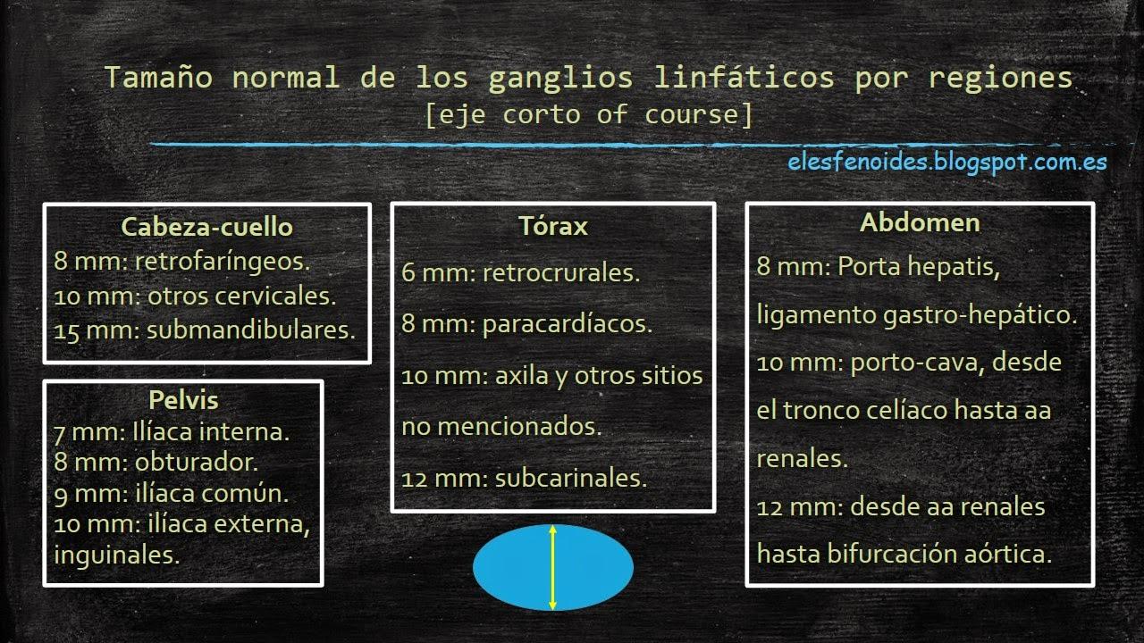 El esfenoides: Tamaño normal de los ganglios linfáticos por regiones.