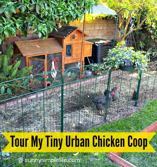 sunny simple life tour of my tiny chicken coop
